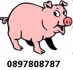 Еко Свинеферма Монтана 0897808787  продава ПРАСЕНЦА и угоени ПРАСЕТА  –  ЦЕЛОГОДИШНО