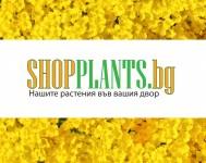 Шоп Плантс предлага градински растения на ниски цени